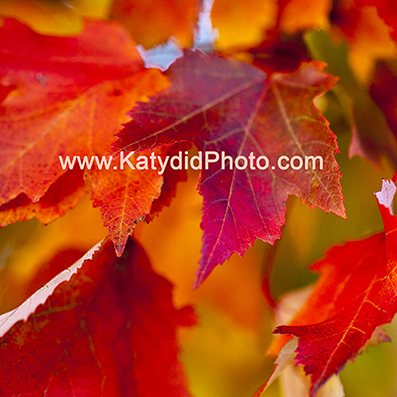 Pocono Fall Weekend Workshop