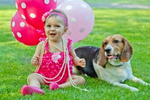 Outside beagle with baby and balloons